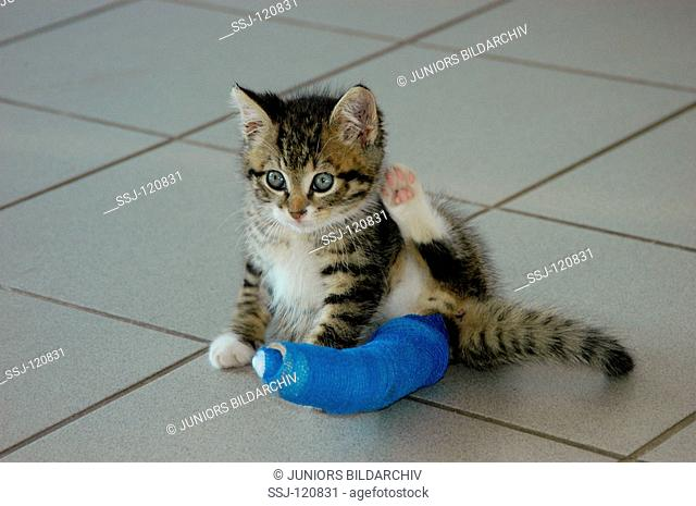 kitten with plaster bandage at paw
