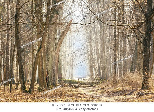 Gomel, Belarus. Countryside Road Lane Path Walkway Through Oak Autumn Forest With Trees. Sunset Sunrise. Nobody. Beautiful Alley In Park