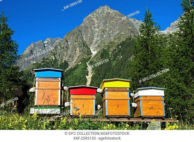 Bee hives behind peak Pointes des Six Niers, La Fouly, Val Ferret, Valais, Switzerland