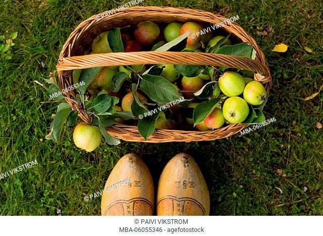 Fall harvest baskett of apples