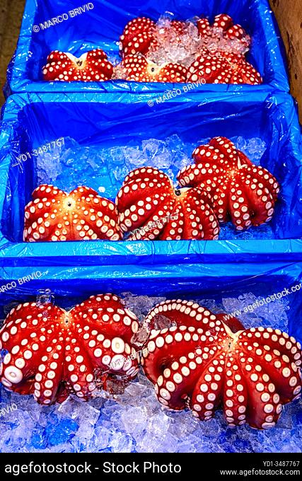 Tokyo Japan. Fish Market. Octopus