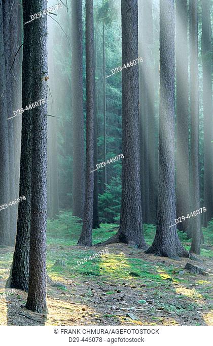 Forest in Southern Bohemia, Czech Republic