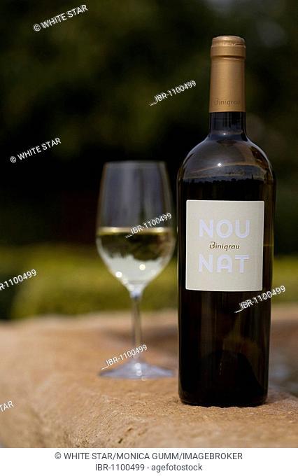White wine, Nou Nat, Bodega Binigrau, Majorca, Balearic Islands, Spain, Europe