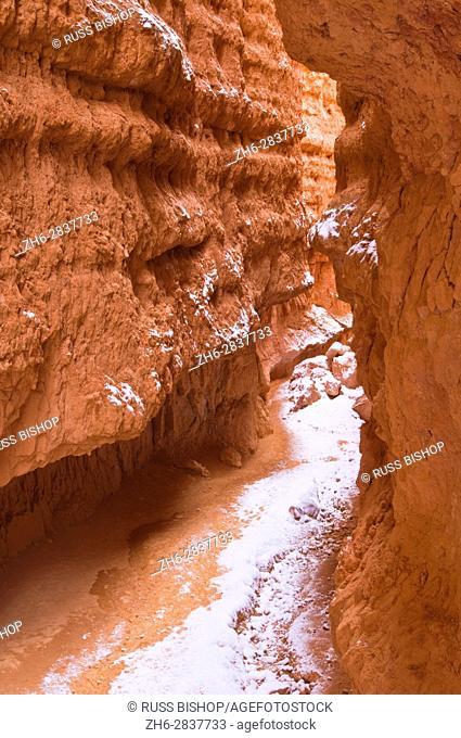 Fresh powder along Wall Street, Bryce Canyon National Park, Utah USA