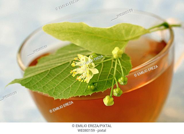 Linden flower tea (Tilia platiphyllos or Tilia cordata)