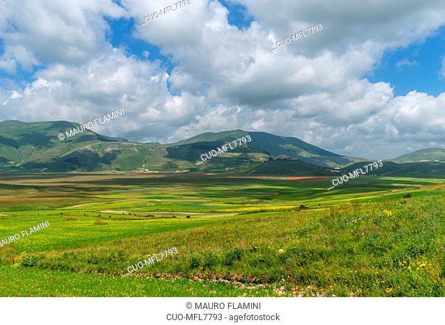 Monti Sibillini National Park, Flowering, Castelluccio di Norcia; Umbria, Italy, Europe