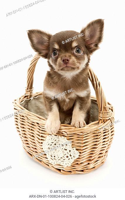 A puppy in a bucket