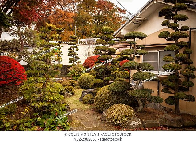 Typical Japanese garden with intricately pruned trees, Matsumoto, Japan