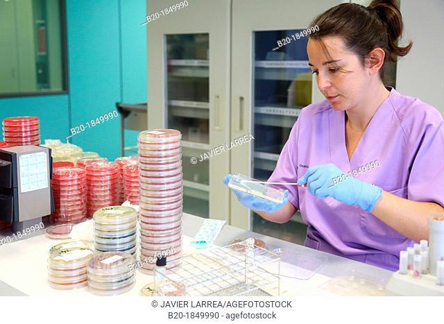 Antibiogram, urine specimens, Microbiology Department,Donostia Hospital, San Sebastian, Donostia, Gipuzkoa, Basque Country, Spain