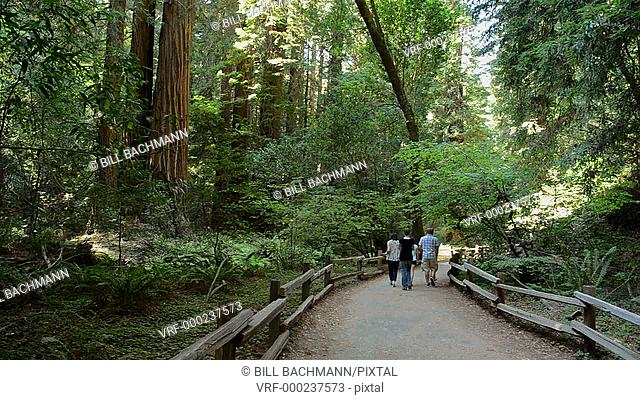 Muir Woods California CA above San Francisco wonderful giant Redwoods in woods