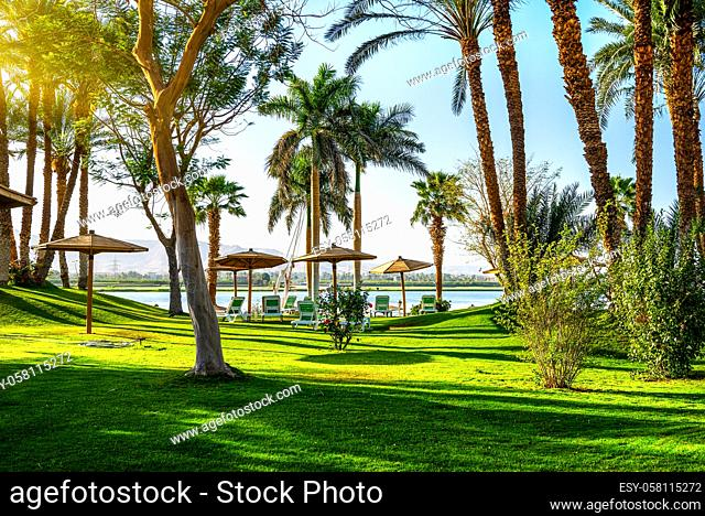 Meadow with fresh green grass and palm trees on a coast of river Nile, Egypt