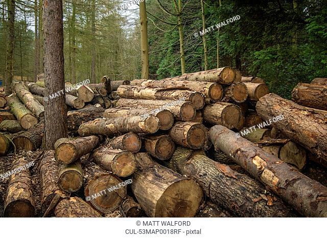 Pile of cut logs in forest