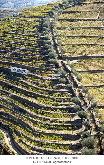 Vines growing on terraces above the River Torto below Casais Do Douro, In the Alto Douro wine region, Northern Portugal