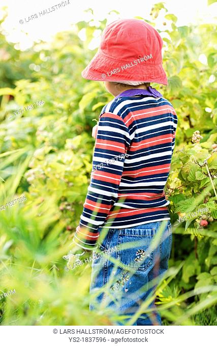 Small child 3 years old playing in a garden and exploring the plants, Sweden