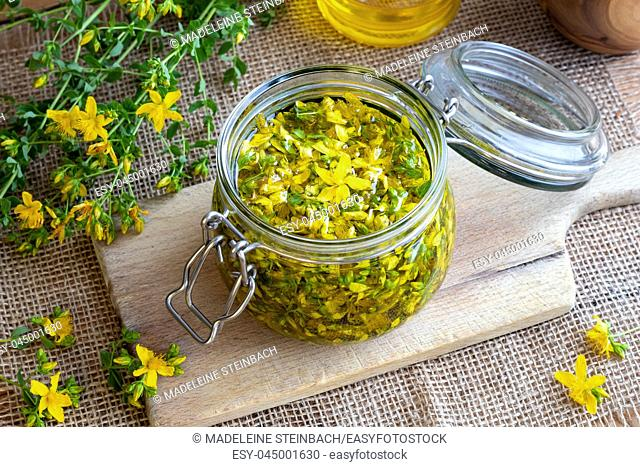 St. John's wort flowers macerating in olive oil in a glass jar