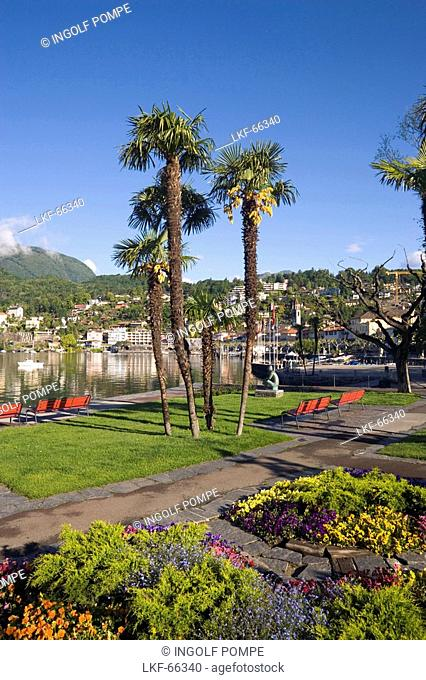 Palms growing at lakeshore of Lake Maggiore, Ascona, Ticino, Switzerland