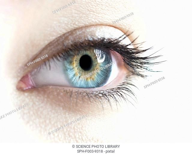 Woman's eye