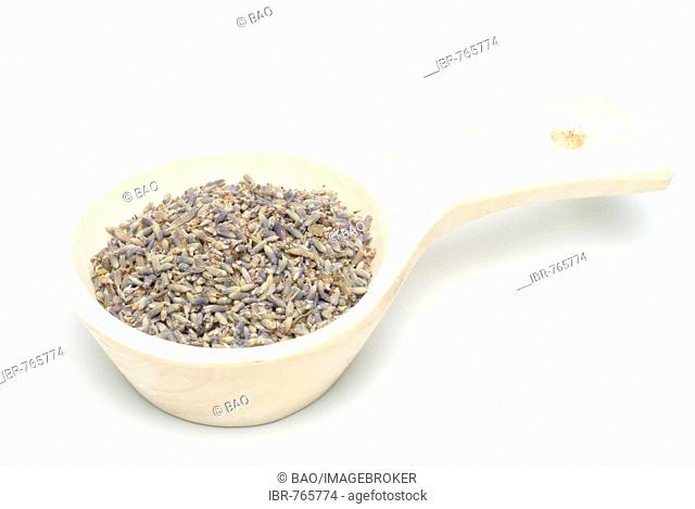 Lavender (Lavandula angustifolia, Lavandula officinalis, Lavandula vulgaris), medicinal plant, blossoms in a measuring spoon