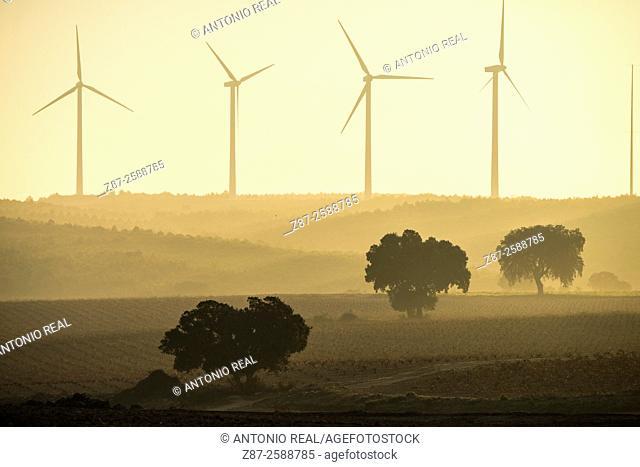 Holm oaks (Quercus ilex) and wind turbines, Paraje de Botas, Almansa, Albacete, Castile-La Mancha, Spain
