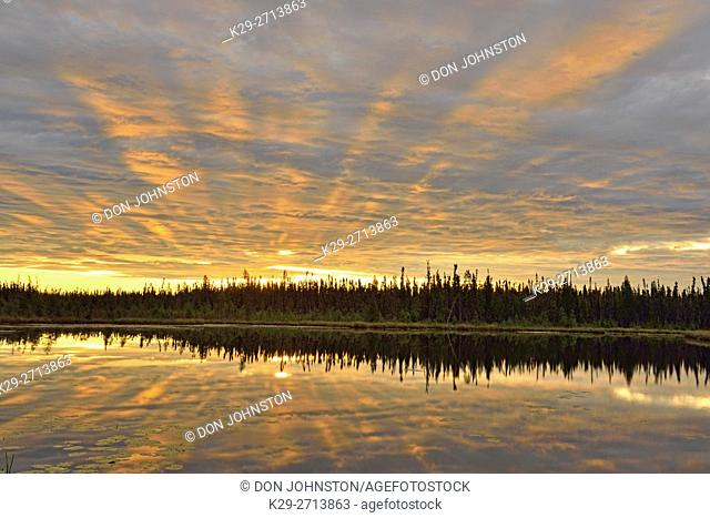 Morning skies reflected in a beaver pond, Wood Buffalo National Park, Northwest Territories, Canada