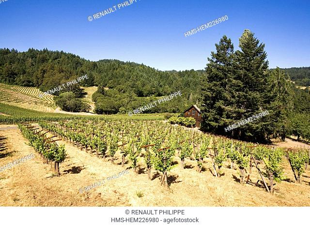 United States, California, Napa Valley, St. Helena, Spring Mountain Vineyard, the vineyard, the vines