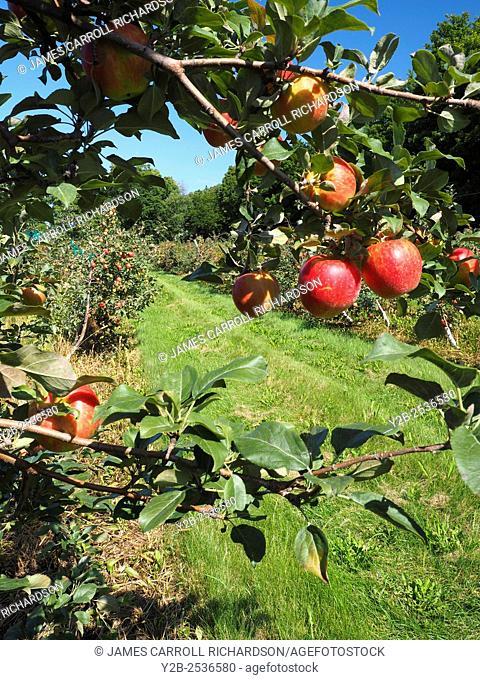 Apple orchard in Door County Wisconsin