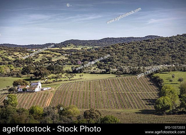 Vineyard landscape and the Quinta Plansel vineyard, Alentejo, Portugal
