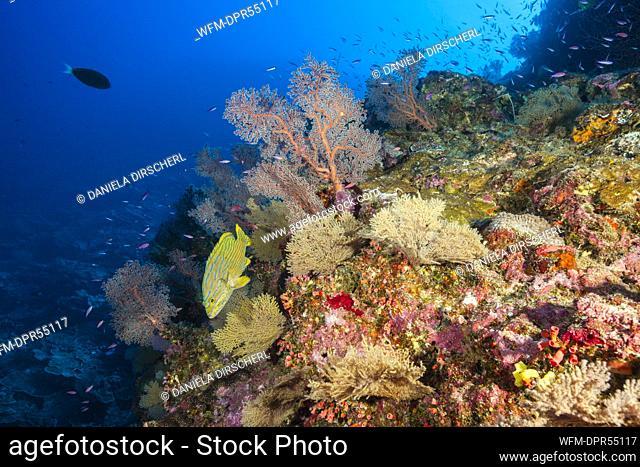 Pristine Coral Reef, Christmas Island, Australia