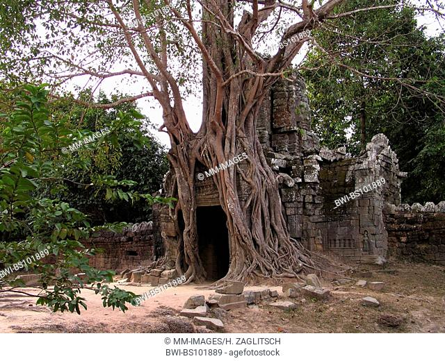Tempel Ta Som, temple ruins under ficus roots, Cambodia