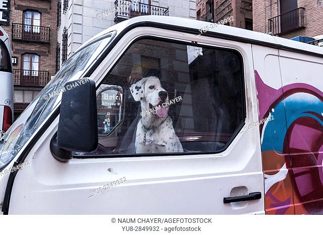 The dog sits in the car at the driver's seat