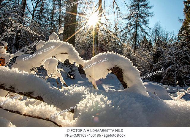 Winter at the Bramwald, Göttingen district, Lower Saxony, Germany / Winter im Bramwald, Landkreis Göttingen, Niedersachsen, Deutschland