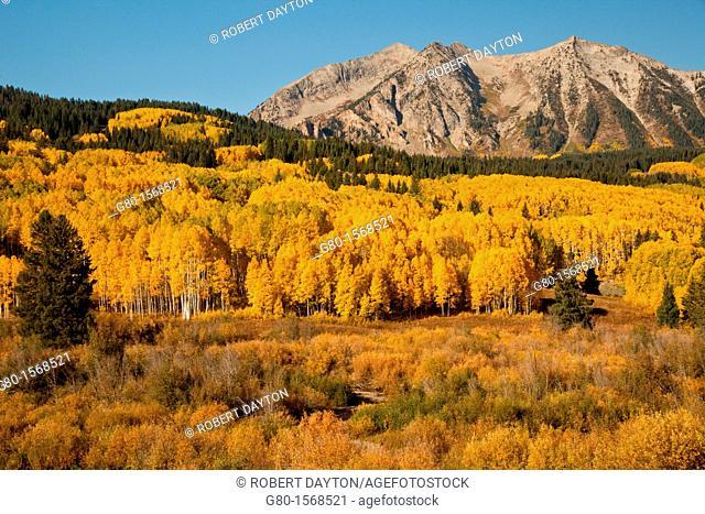 Fall color in Kebler Pass, Colorado