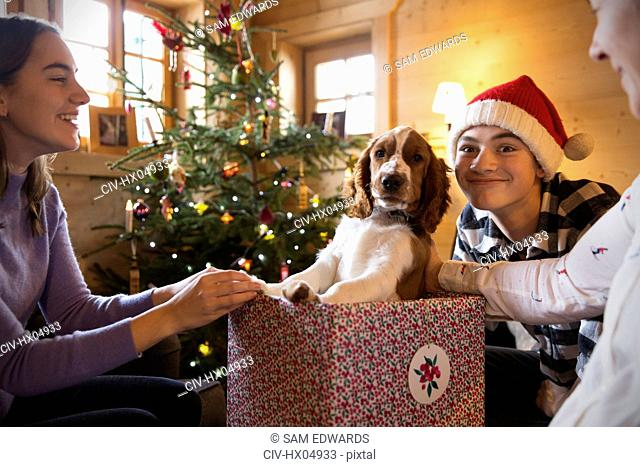Portrait family playing with dog in Christmas gift box