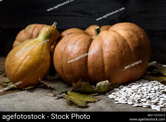 pumpkins lying on a wooden table with viburnum and seeds
