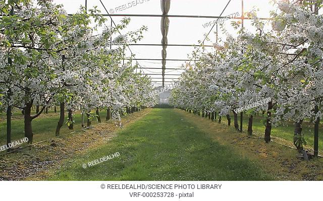 Blossom trees in a garden centre