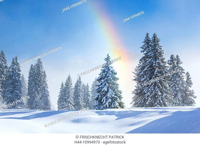 Snow-covered firs with rainbow, Switzerland