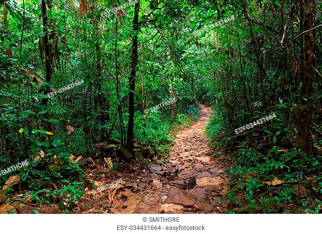 Path in the wet and deep jungle of Ko Kood island in Thailand