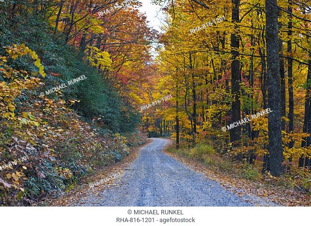 Road leading through trees with colourful foliage in the Indian summer, Blue Ridge Mountain Parkway, North Carolina, United States of America, North America