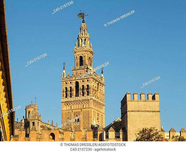 The Moorish Giralda was built from 1184-96. In the foreground the walls of the Patio de Banderas. Seville, Seville province, Andalusia, Spain