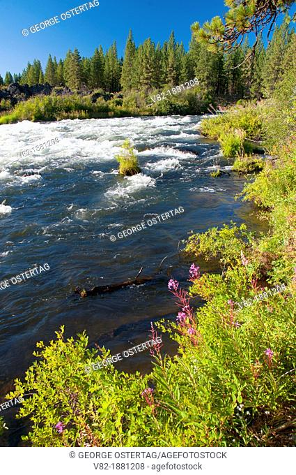 Deschutes Wild and Scenic River from Deschutes River Trail, Deschutes National Forest, Oregon