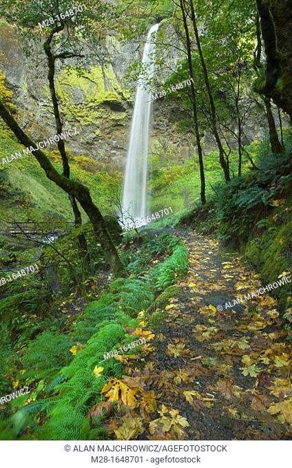 Trail to Elowah Falls, Columbia River Gorge National Scenic Area Oregon