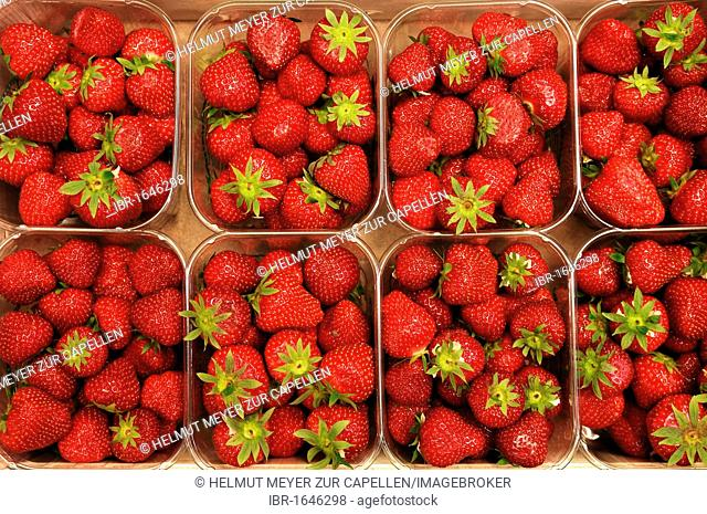 Strawberries (Fragaria), portioned into plastic trays