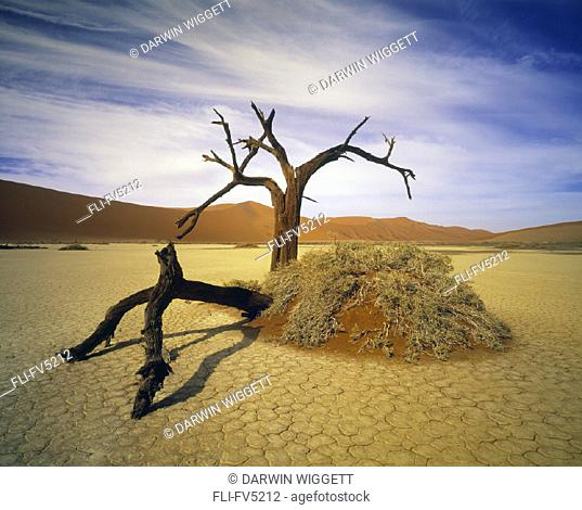 FV5212, Natural Moments Photography, Deadvlei, Namib Desert, Namibia, Africa