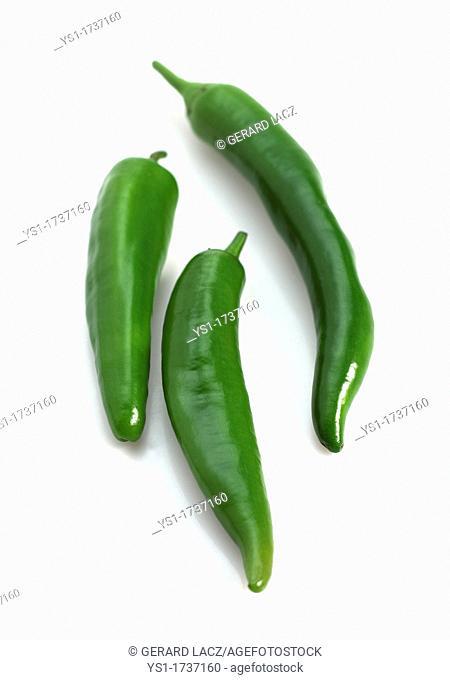Green Chili Pepper, capsicum annuum
