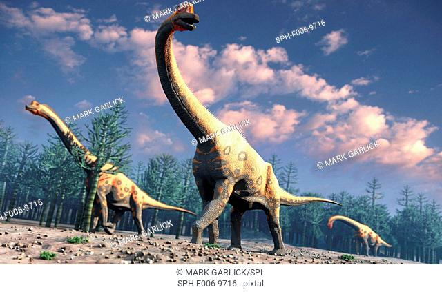 Brachiosaurus was a herbivorous dinosaur that lived roughly 150 million years ago during the Jurassic Period. One of the largest known species of sauropod – the...