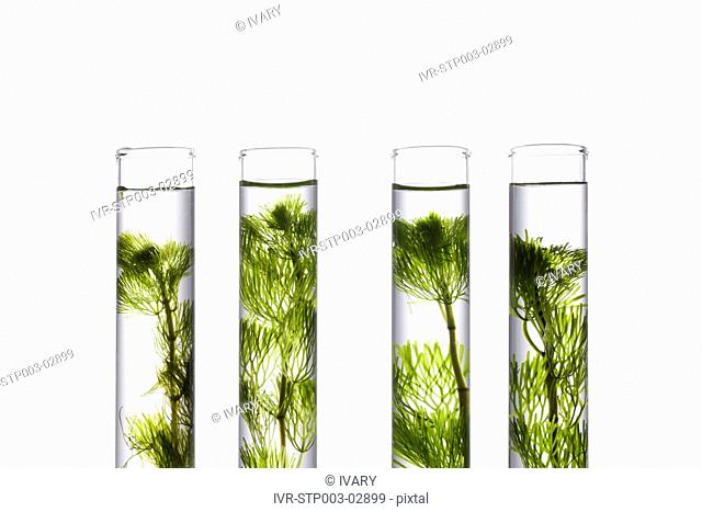 Sprouts Growing In Test Tube