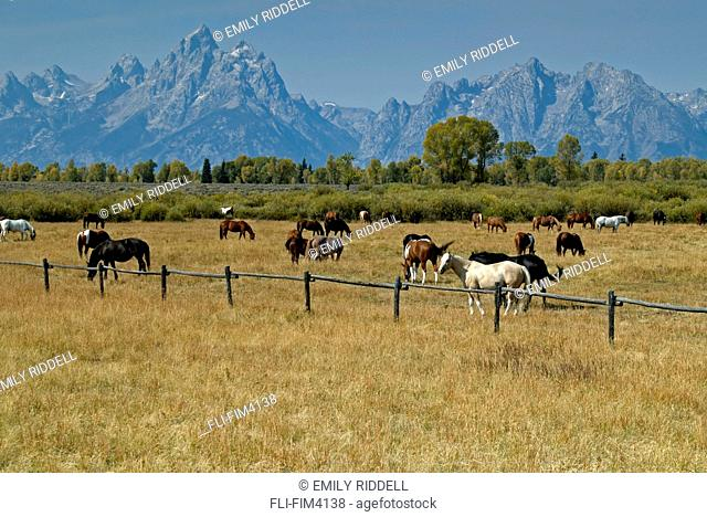Horse Ranch on Jackson Hole Road, Grand Teton National Park, Wyoming