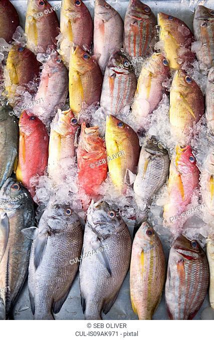 Selection of freshly caught fish on ice, Galle, Sri Lanka