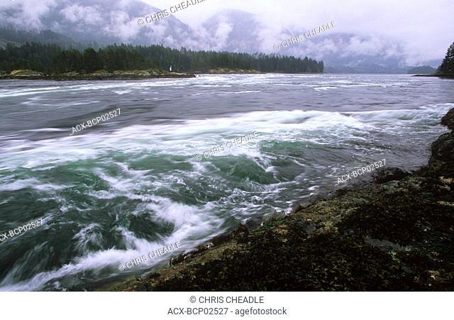 Sechelt Peninsula, Skookumchuck Narrows Provincial Park near Egmont, British Columbia, Canada