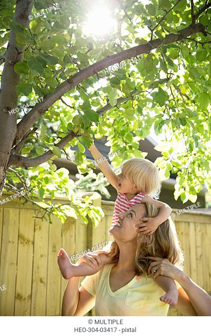 Mother helping daughter reaching for apples on tree in sunny backyard